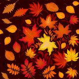Seamless autumn pattern with leaves and whorl vector illustration Stock Photography