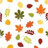 Seamless autumn pattern. Seamless pattern with autumn leaves Stock Illustration
