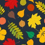 Seamless Autumn pattern Orange, yellow, brown red fall forest rowan, birch, tree leaves and herbs. Wallpaper, background. Seamless Autumn pattern Vector floral Royalty Free Illustration