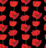 Seamless backgro with red flower poppy Stock Photos
