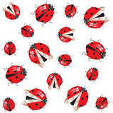 Seamless background. With ladybirds over white vector illustration