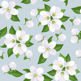 Vector Seamless background with apple blossoms. Stock Photography