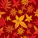 Seamless Background with Autumn Leas. Stock Image