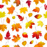 Seamless  background autumn leaves Stock Photography
