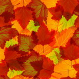 Seamless background with autumn leaves Royalty Free Stock Images