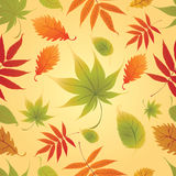 Seamless Background - Autumn Leaves. Thanksgiving. Vector Seamless Background with colorful Autumn Leaves. Thanksgiving (from my big Seamless pattern collection Royalty Free Stock Images