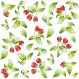 Seamless background from a berry ornament, fashion Royalty Free Stock Images