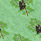 Seamless background with black currant Stock Images