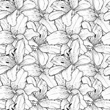 Seamless background of black and white lilies hand-drawn Royalty Free Stock Photos