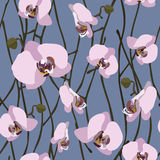 Seamless background from blossoming orchid flowers and stems.  Royalty Free Stock Photography