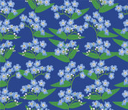 Seamless background with blue flowers. Seamless pattern background with circle bouquets of blue flowers forget-me-not Stock Photography