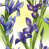 Seamless background with blue irises Royalty Free Stock Photos