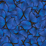 Seamless background from blue morpho. Butterflies Stock Photo