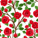 Vector seamless background with red roses. Royalty Free Stock Images