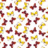 Seamless background with bright aquarelle butterfly Stock Images