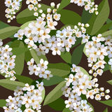 Seamless background from bunch of blossoming cherries flower Stock Images