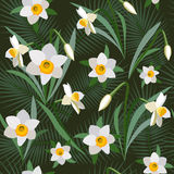Seamless background from bunch of blossoming narcissus flowers Royalty Free Stock Image