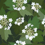Seamless background from bunch of blossoming viburnum flower.  Royalty Free Stock Photo