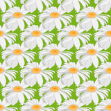 Seamless background of camomile. Large flowers on a light green background. Royalty Free Stock Images