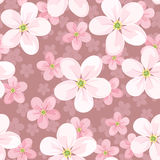 Seamless background with cherry blossoms. Royalty Free Stock Photo
