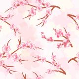 Seamless background - cherry blossoms. Branches of a cherry blos. Spring. Seamless pattern of cherry blossoms. Cherry branches on a bright background Stock Images