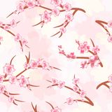 Seamless background - cherry blossoms. Branches of a cherry blos. Spring. Seamless pattern of cherry blossoms. Cherry branches on a bright background. Vector Royalty Free Stock Images