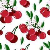 Seamless background with cherry and cherry blossoms. Endless pattern on white background.design template for fabric, brochure, catalog, poster, book, magazine royalty free illustration
