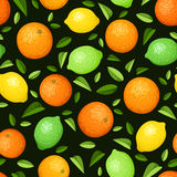 Seamless background with citrus fruits. Vector illustration. Stock Photos