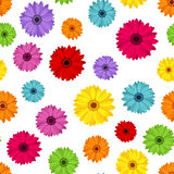 Seamless background with colored gerbera.  Stock Photos