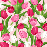 Vector seamless background with colored tulips. Stock Images