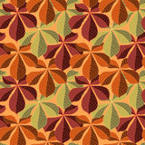 Seamless background with colorful autumn leaves. Vector illustration. Stock Photography