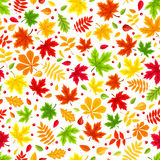 Seamless background with colorful autumn leaves on white. Vector illustration. Stock Images