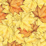 Seamless background with colorful autumn maple leaves Stock Photos