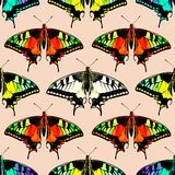 Seamless background of colorful butterflies. Seamlles royalty free illustration