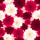 Seamless background with colorful dahlia flowers. Stock Images