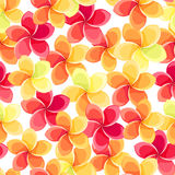 Seamless background with colorful flowers. Royalty Free Stock Photos