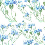 Seamless background. Cornflowers. Collage of flowers and leaves.Wallpaper. Use printed materials, signs, posters, postcards, pack Stock Photo