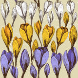 Seamless background with crocus flowers Stock Photos