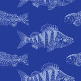 Seamless background with crucian carp on blue Stock Photos