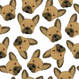 Seamless background with cute brown bulldog sketch . Realistic dog Stock Images
