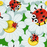 Seamless background with daisies and baby ladybird Royalty Free Stock Photos