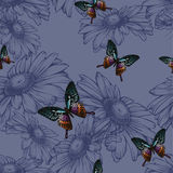 Seamless background with daisies and butterflies, hand-drawing. Royalty Free Stock Photography