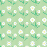 Seamless background of daisies Royalty Free Stock Images