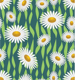 Seamless background with daisies Stock Images