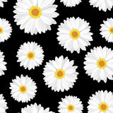Vector Seamless background with daisy flowers. Vector illustration of seamless background with white daisy flowers on a black background Stock Photos
