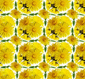Seamless background with dandelion flowers Royalty Free Stock Image
