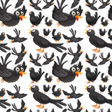 Seamless background design with crows flying Stock Photos