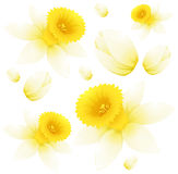 Seamless background design with daffodil flowers Royalty Free Stock Image