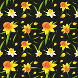 Seamless background design with daffodil flowers Royalty Free Stock Images