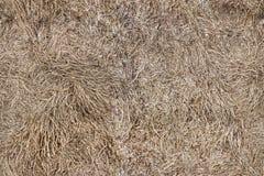 Seamless background. Dry grass. Stock Photo